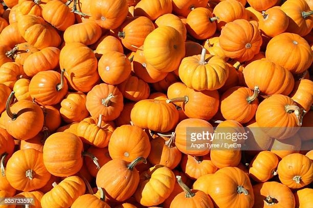 Full Frame Shot Of Pumpkins At Market On Sunny Day