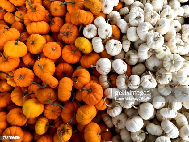 full frame shot of pumpkins - karen price stock pictures, royalty-free photos & images
