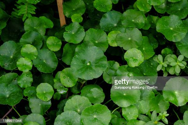 full frame shot of raindrops on leaves - 146161657 stock pictures, royalty-free photos & images