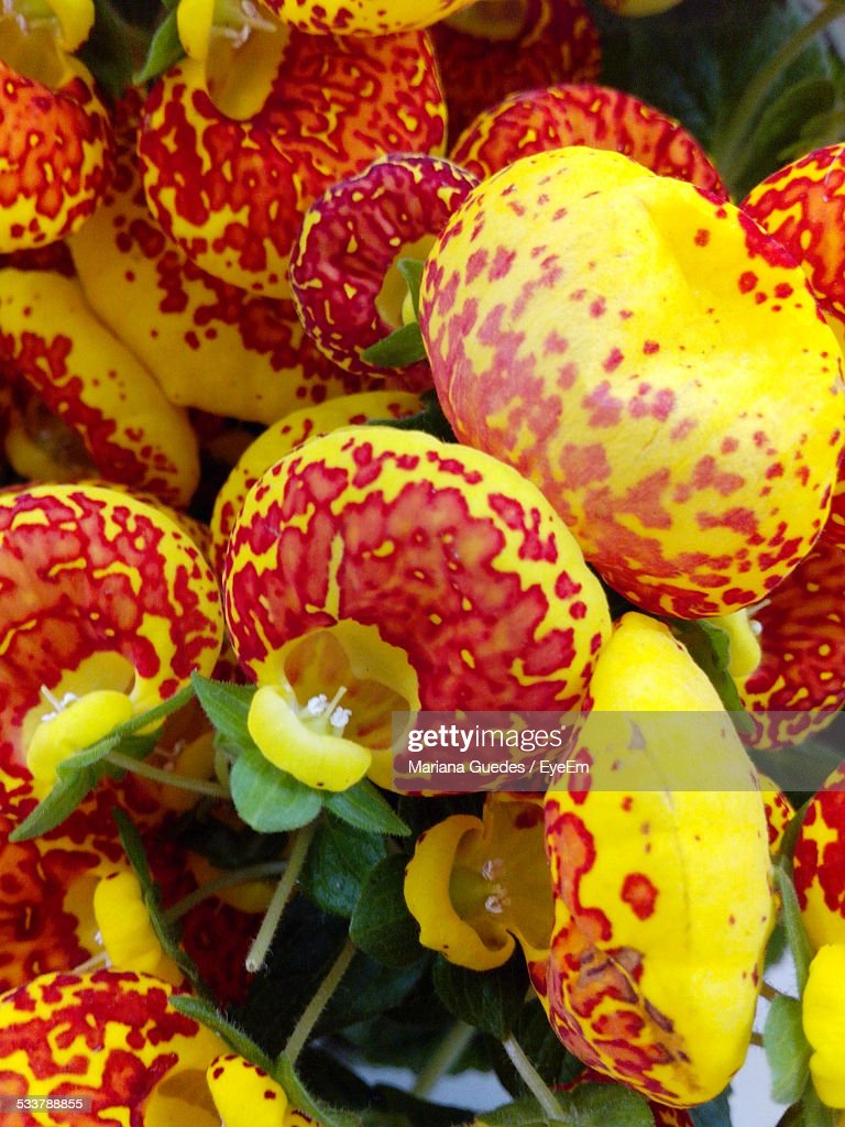 Full Frame Shot Of Red And Yellow Flowers : Foto stock
