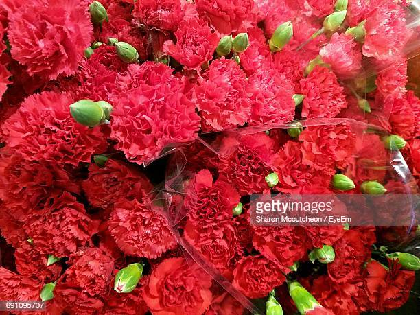Full Frame Shot Of Red Carnation Flowers For Sale