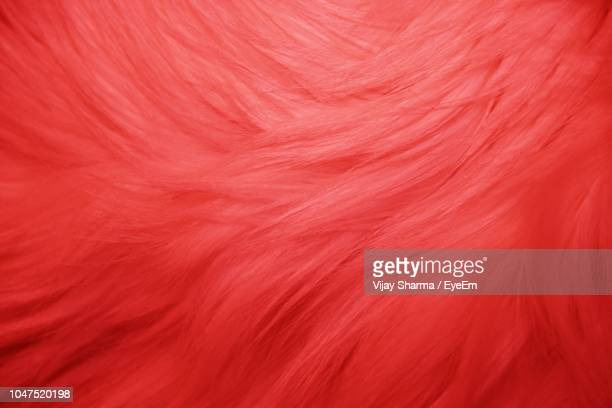 full frame shot of red fur - fur stock pictures, royalty-free photos & images