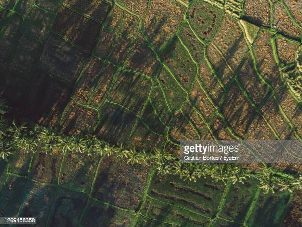 full frame shot of rice field - bortes stock pictures, royalty-free photos & images