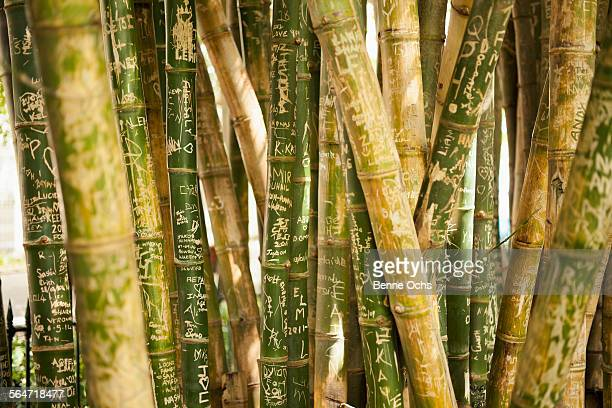 Full frame shot of scribbled bamboo groves