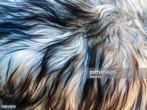full frame shot of sheep fur - soltanto un animale foto e immagini stock