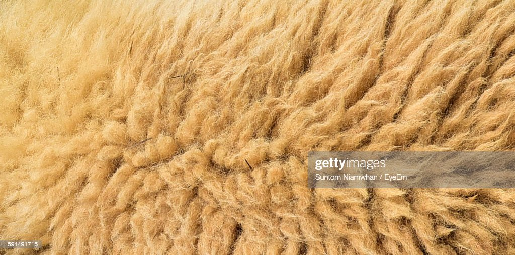 Full Frame Shot Of Sheep Wool : Stock Photo