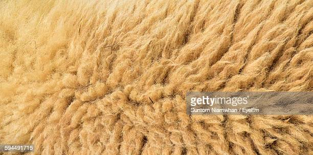 Full Frame Shot Of Sheep Wool