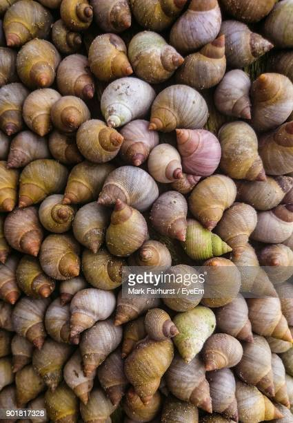full frame shot of snails - trinidad and tobago stock pictures, royalty-free photos & images