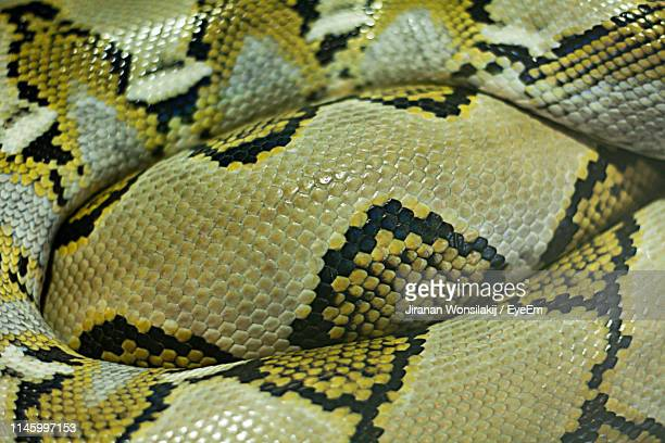 full frame shot of snake - animal markings stock pictures, royalty-free photos & images