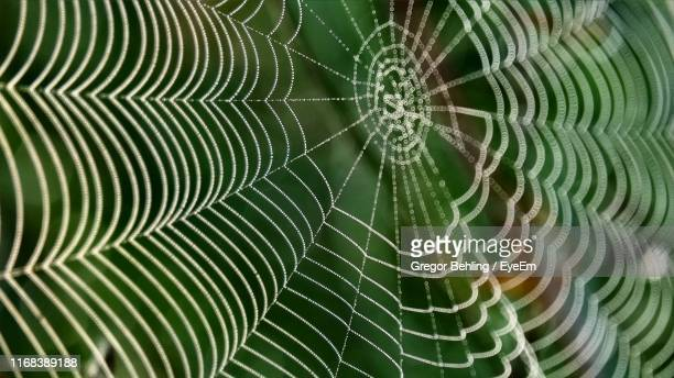 full frame shot of spider web - intricacy stock pictures, royalty-free photos & images