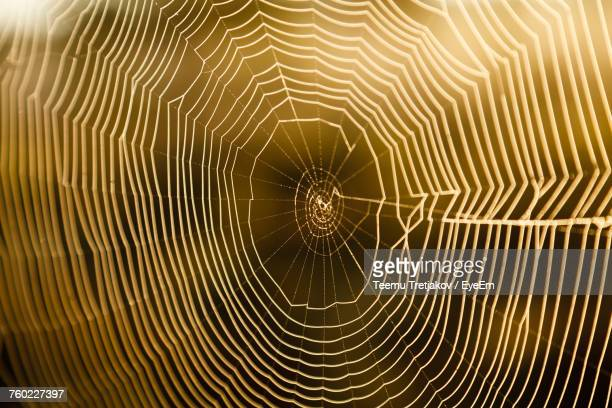 full frame shot of spider web - teemu tretjakov stock pictures, royalty-free photos & images