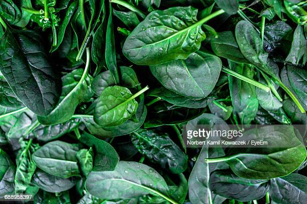 full frame shot of spinach leaves - spinach stock pictures, royalty-free photos & images