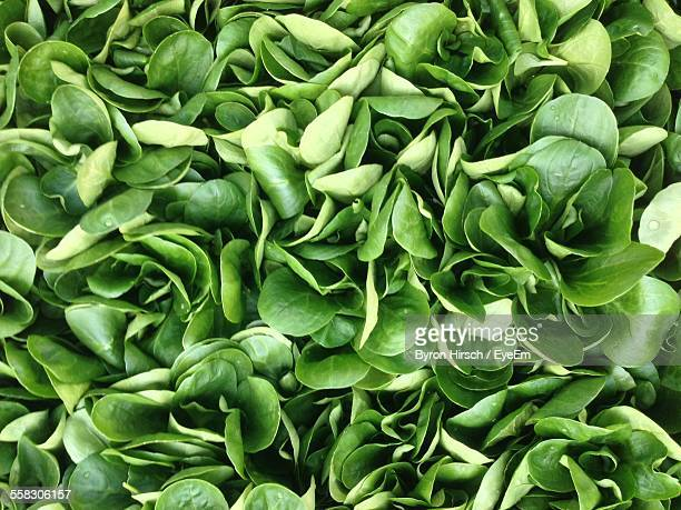 full frame shot of spinach - spinach stock photos and pictures