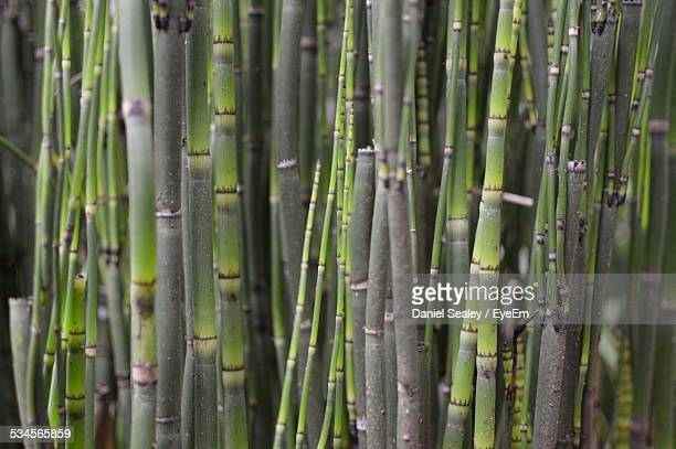 full frame shot of sugar cane - sugar cane stock pictures, royalty-free photos & images