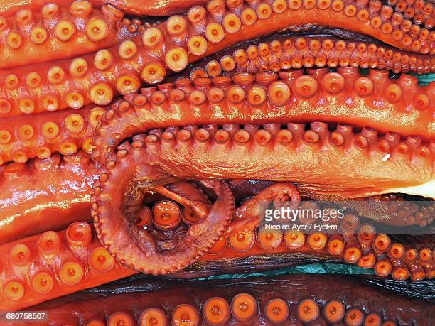 full frame shot of tentacles - tentacle stock pictures, royalty-free photos & images