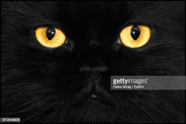 full frame shot of the head of a black cat - gatto nero foto e immagini stock