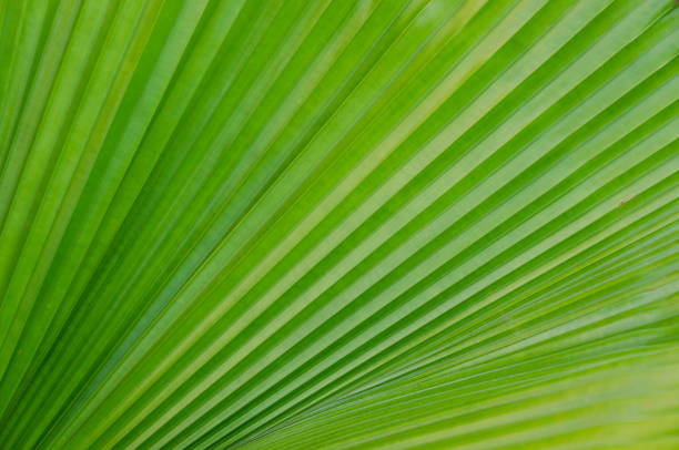 Full frame shot of the palm leaf