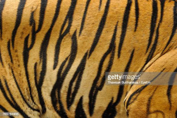 full frame shot of tiger - tiger stock pictures, royalty-free photos & images
