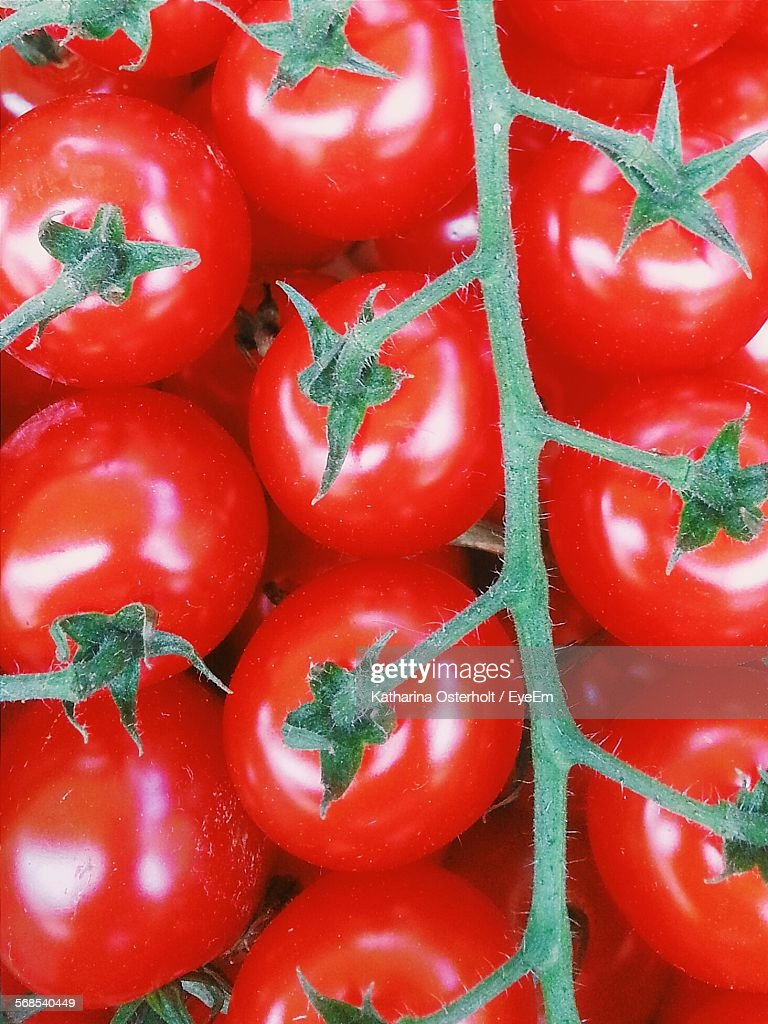 Full Frame Shot Of Tomatoes Growing On Plant : Stock Photo