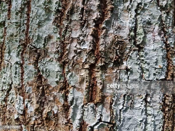 full frame shot of tree bark texture - trefferversuch stock-fotos und bilder