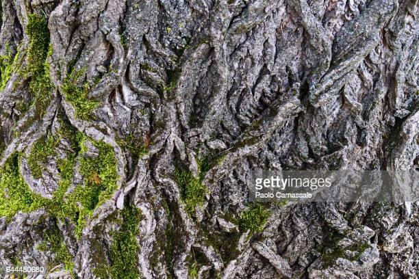 Full frame shot of tree bark with moss
