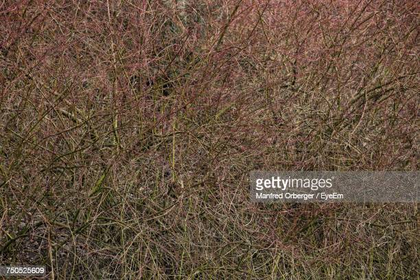 Full Frame Shot Of Tree Branches In Forest