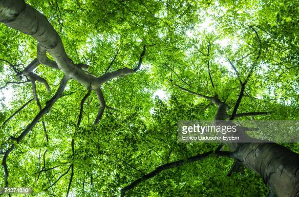 Full Frame Shot Of Tree Canopy In Forest