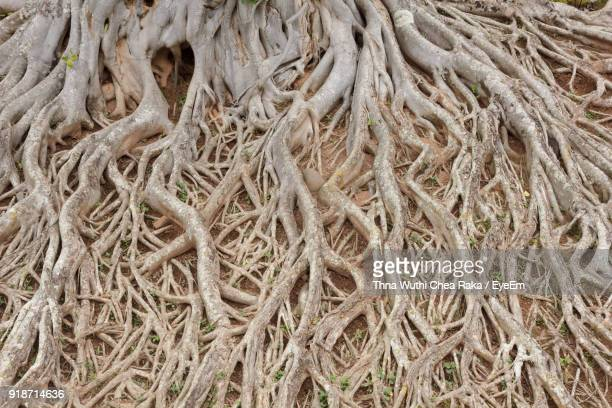 Full Frame Shot Of Tree Roots