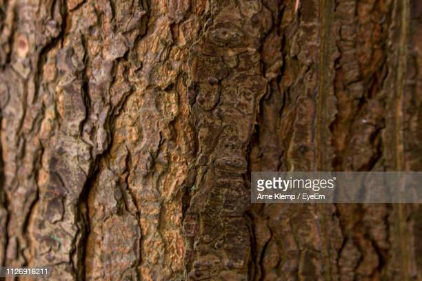 full frame shot of tree trunk - bark stock pictures, royalty-free photos & images