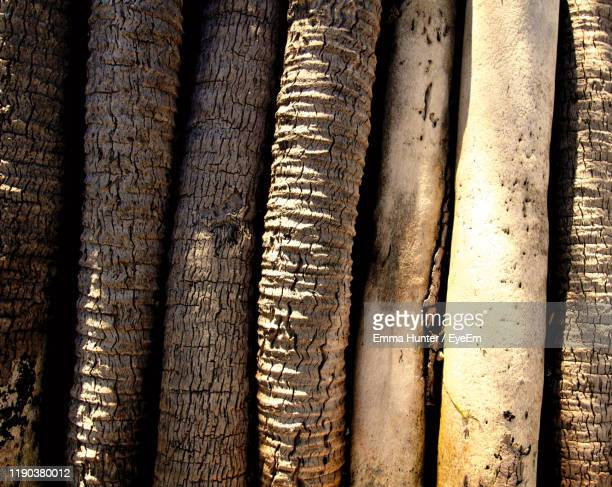 full frame shot of tree trunk - emma hunter eye em stock photos and pictures