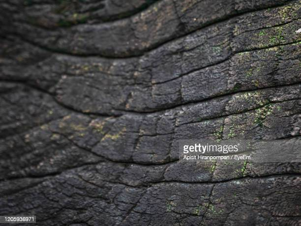 full frame shot of tree trunk - apisit hiranpornpan stock pictures, royalty-free photos & images