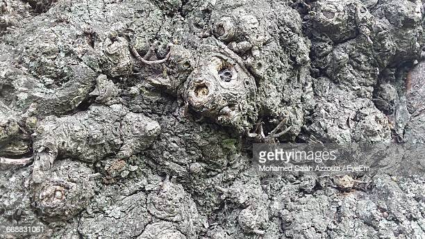 full frame shot of tree trunk - salah stock photos and pictures