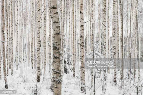 full frame shot of tree trunks in winter - teemu tretjakov stock pictures, royalty-free photos & images