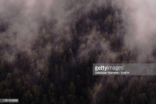 full frame shot of trees against sky - sebastian grey stock pictures, royalty-free photos & images