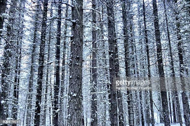 60 Top Snowy Forest Wallpaper Pictures Photos And Images