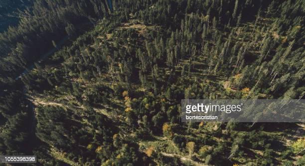full frame shot of trees in forest - bortes stock-fotos und bilder