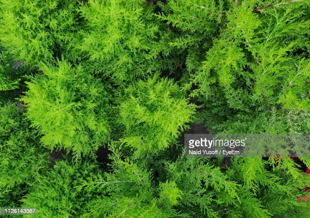 full frame shot of trees in forest - najid yusoff stock pictures, royalty-free photos & images