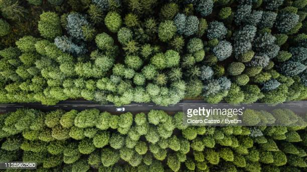 full frame shot of trees in forest - road stock pictures, royalty-free photos & images