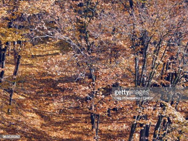 full frame shot of trees in forest - oleg prokopenko stock pictures, royalty-free photos & images