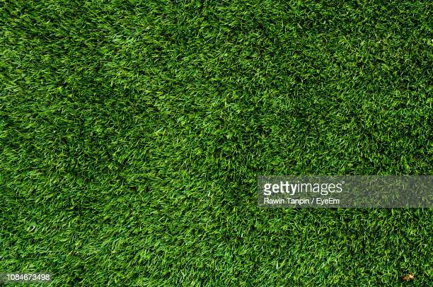 full frame shot of turf - grass stock pictures, royalty-free photos & images