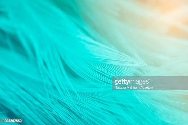 full frame shot of turquoise feathers - fluffy stock pictures, royalty-free photos & images