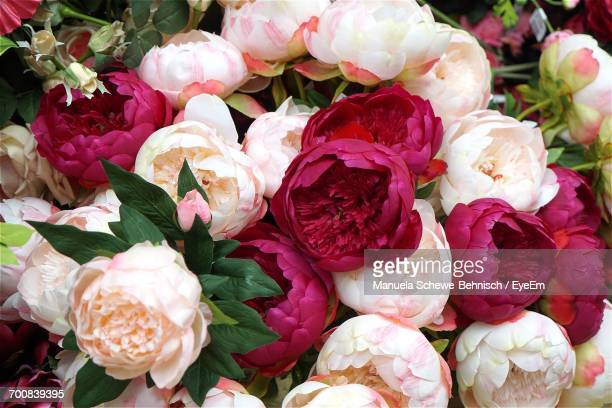 full frame shot of various peonies in bouquet - peonia foto e immagini stock