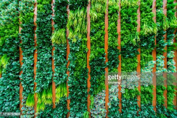 full frame shot of wall decorated with the plants - sustainable architecture stock pictures, royalty-free photos & images