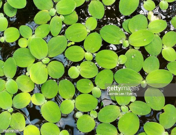 full frame shot of water lillies - lucinda lee stock photos and pictures