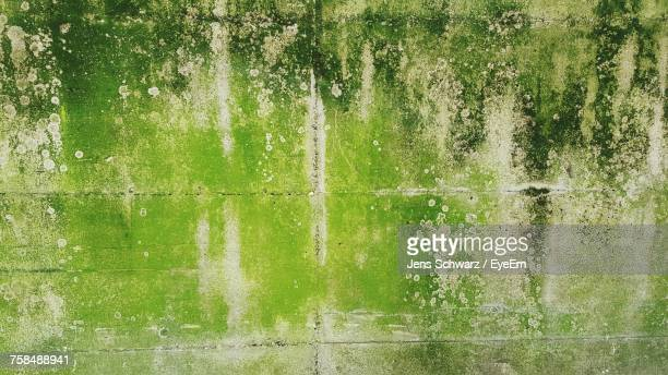 full frame shot of weathered wall - moss stock pictures, royalty-free photos & images