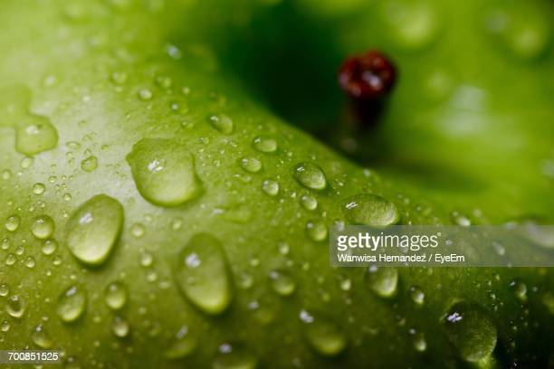 Full Frame Shot Of Wet Granny Smith Apple