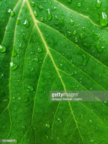 Full Frame Shot Of Wet Green Leaf