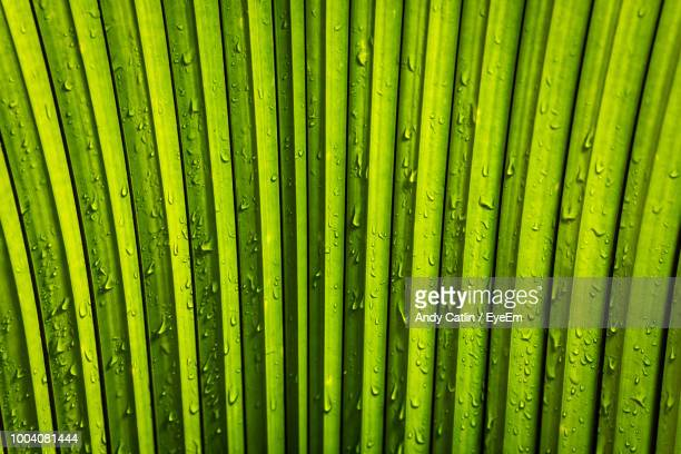 full frame shot of wet palm leaf - palm stock photos and pictures
