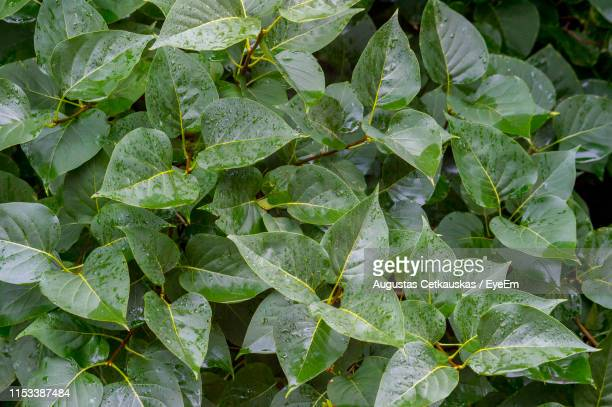full frame shot of wet plant - cetkauskas stock pictures, royalty-free photos & images
