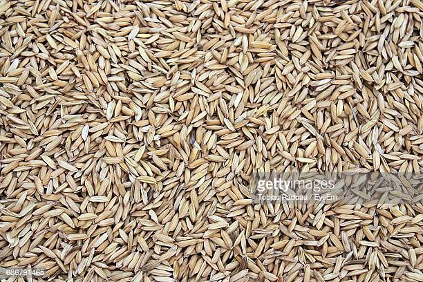 full frame shot of wheat - cereal plant stock photos and pictures